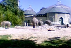 Zoo Bilder